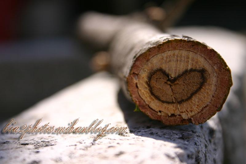 سری دوم عکس های عاشقانه lovely photo
